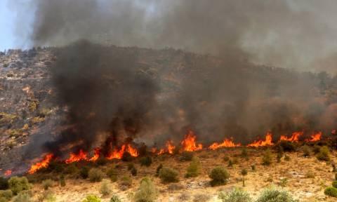 Οικονομική ενίσχυση 18,4 εκατ. ευρώ στους δήμους για αντιμετώπιση δασικών πυρκαγιών