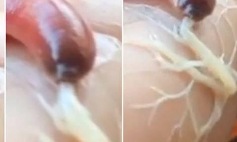 Σπάνιο θαλάσσιο σκουλήκι… spiderman εντοπίστηκε στην Ταϋλάνδη! (video)