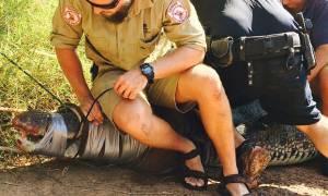 Αυστραλία: Έπιασαν τερατώδη κροκόδειλο 4.5 μέτρων (video & pics)