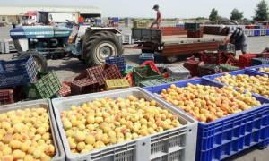 Έλληνες εξαγωγείς δεν πληρώθηκαν από πολωνικές εταιρείες