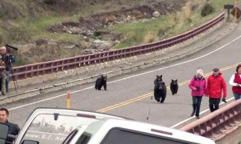 ΗΠΑ: Αρκούδες πήραν στο κυνήγι τουρίστες (video)