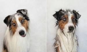 Αξιολάτρευτες φωτογραφίες σκυλιών πριν και μετά το μπάνιο τους