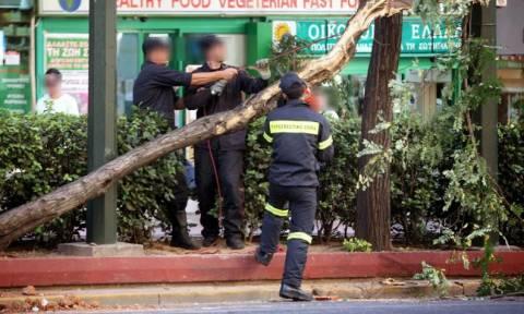 Αττική: Οι ισχυροί άνεμοι έφεραν πτώσεις δέντρων και αντικειμένων