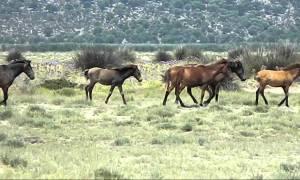 Ιωάννινα: Εντοπίστηκαν νεκρά άλογα στο Πάπιγκο
