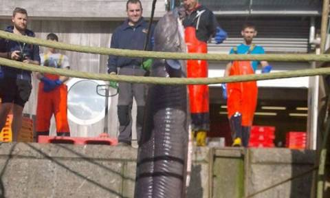 Δείτε το θαλάσσιο... τέρας που πιάστηκε στα δίχτυα ψαρά (photos)