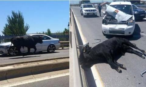 Ισπανία: Ο ταύρος το έσκασε – 11 τραυματίες (video)