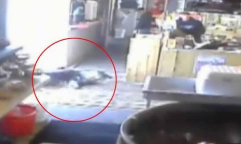 ΗΠΑ: Φώκια προσπάθησε να κλέψει ψάρια από… σούπερ μάρκετ! (video)