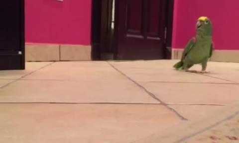 Ο παπαγάλος που έχει κάνει θραύση στο Διαδίκτυο (video)