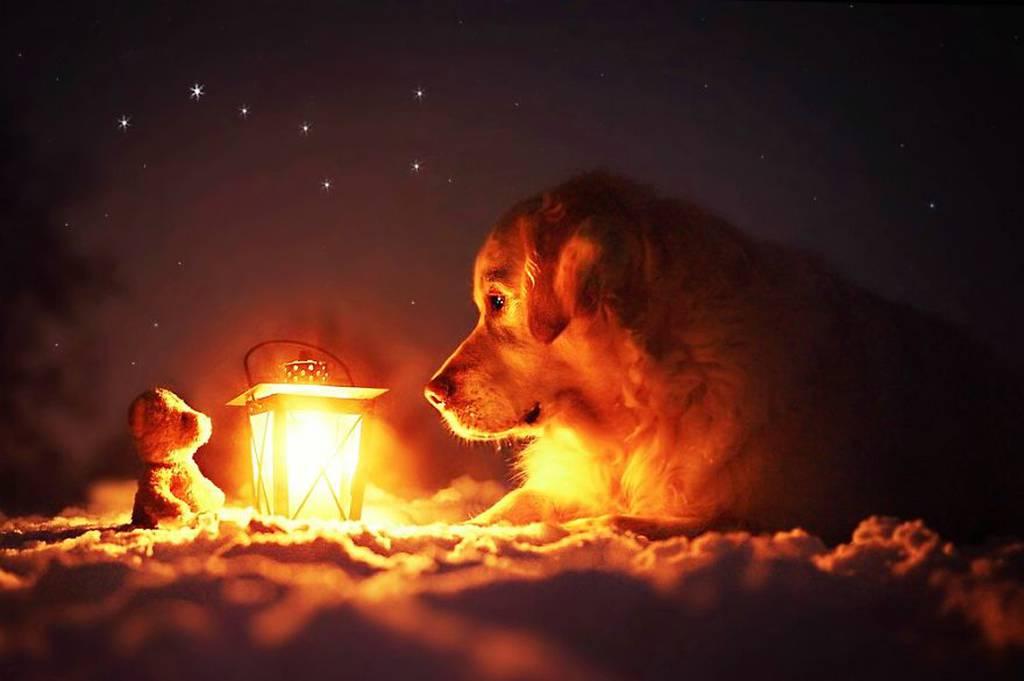 Ένας σκύλος και το αρκουδάκι του σε περιπέτειες (photos)