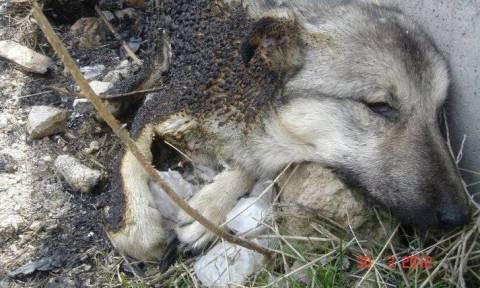 Γενοκτονία σκύλων στην Τουρκία!