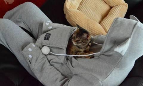 Η γάτα σας θέλει να πάρετε αυτό το φούτερ (video)