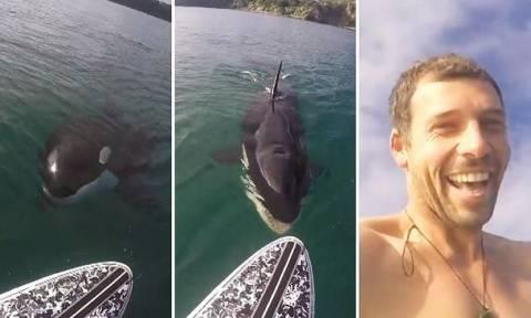Τρόμος στο νερό: Φάλαινα δολοφόνος κυνηγά… σέρφερ! (video)