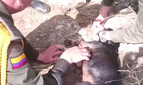 Φιλί της ζωής σε αναίσθητο σκύλο (video)