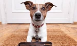 Δείτε την αντίδραση αυτών των σκύλων μόλις ακούν ότι θα πάνε βόλτα!