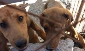 Σοκάρουν δύο νέες περιπτώσεις κακοποίησης ζώων σε Μυτιλήνη και Κεφαλονιά
