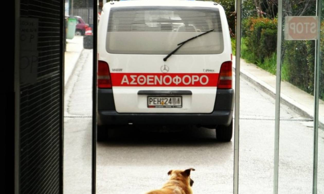 Θεσσαλονίκη: Σκύλος επιτέθηκε και τραυμάτισε κοριτσάκι