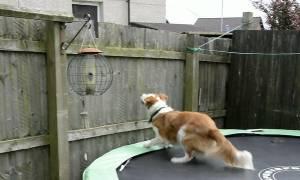 Δεν φαντάζεστε πώς «δραπέτευσε» σκύλος για να ακολουθήσει το αφεντικό του! (video)