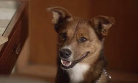 Ο σκύλος που συγκίνησε εκατομμύρια ανθρώπους σε λίγες μόλις ημέρες