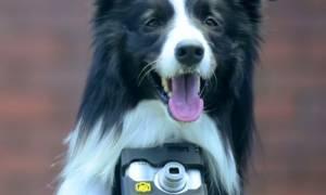 Σκύλος… φωτογράφος απαθανατίζει ό,τι τον ενθουσιάζει! (video)
