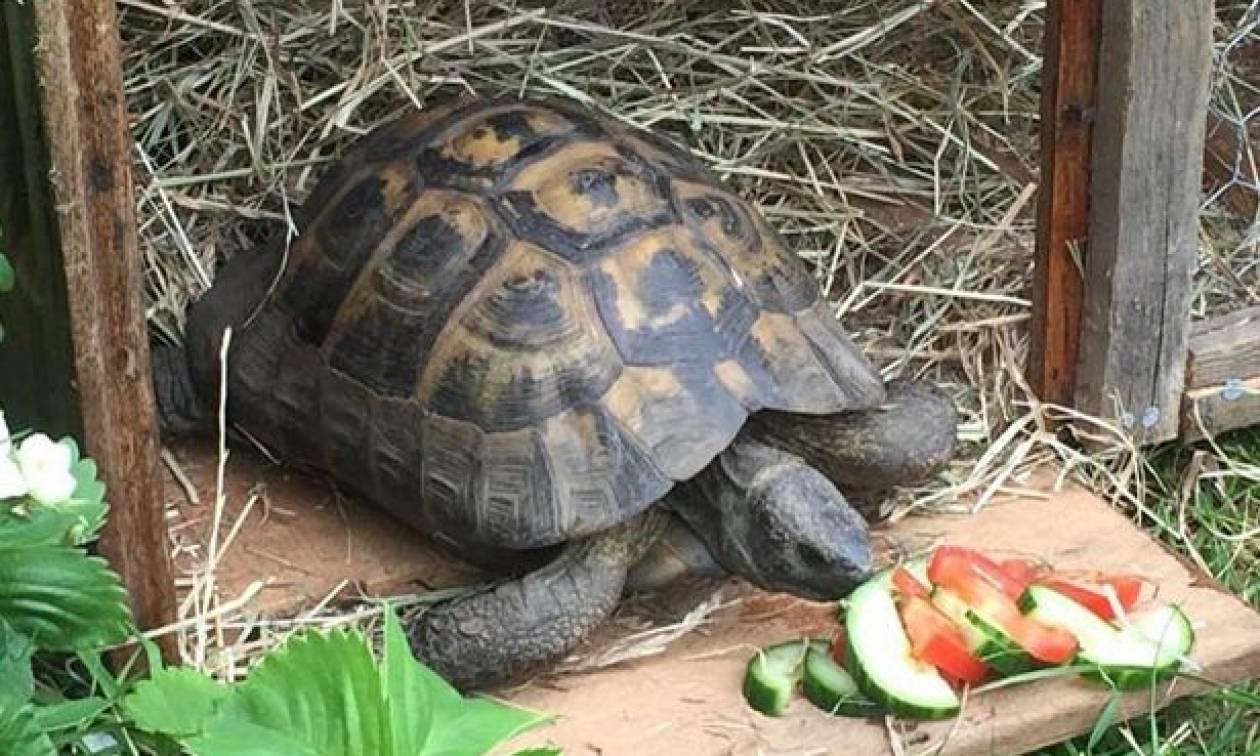 Ο Bobby η χελώνα το σκασε! Δε θα πιστεύετε το γιατί!