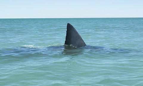 Ισημερινός: Οι Αρχές κατέσχεσαν 200.000 πτερύγια καρχαρία