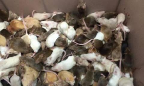 Καναδάς: 1.000 ποντίκια, σκύλοι, γάτες και ψάρια βρέθηκαν κλεισμένα σε ένα σπίτι