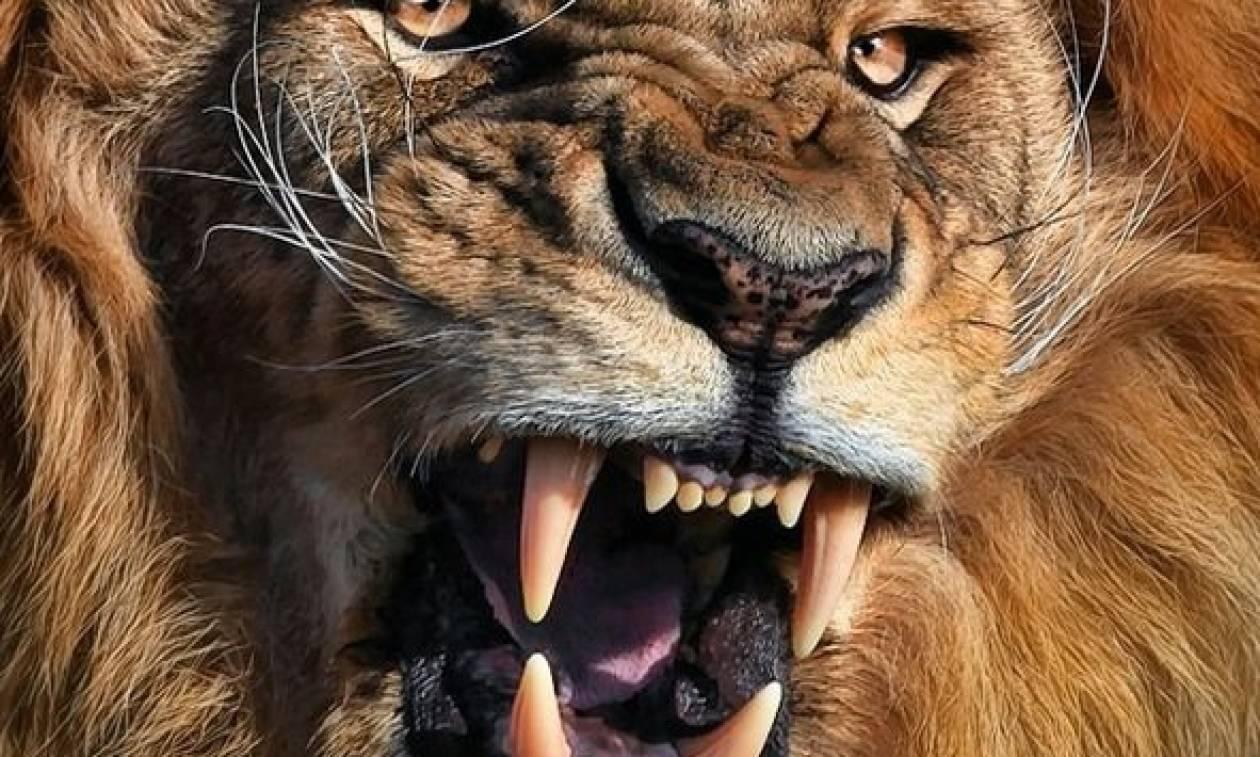 Ν. Αφρική: Λιοντάρι εισέβαλε στο αυτοκίνητο τουρίστριας και την κατασπάραξε ζωντανή! (videos)