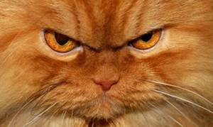 Άνδρας καλεί την Άμεση Δράση γιατί φοβάται τη γάτα του