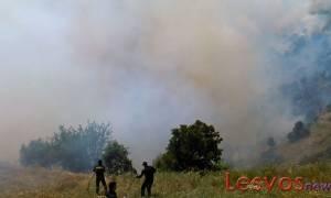 Λέσβος: Σε εξέλιξη μεγάλη πυρκαγιά στην περιοχή Προφήτη Ηλία Καγιανιού