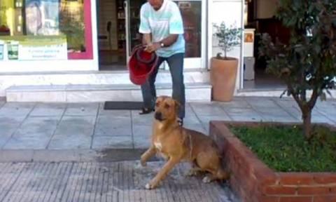 Θεσσαλονίκη: Εισαγγελική εντολή για διερεύνηση του περιστατικού στο οποίο άνδρας καταβρέχει σκύλο