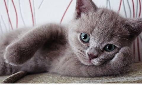 Γάτες ποζάρουν γιατί αυτές ξέρουν πώς! (photos)