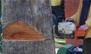 Πατέρας τεσσάρων παιδιών καταπλακώθηκε από δέντρο στην Αρχαία Ολυμπία