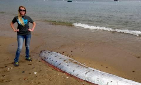 Τρόμος από το γιγάντιο ψάρι που ξεβράστηκε στις ακτές της Καλιφόρνια! (photos)