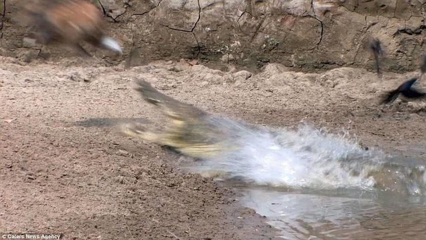 Ίσως ο πιο… loser κροκόδειλος του πλανήτη – Μένει νηστικός λόγω… ανικανότητας (video & pics)