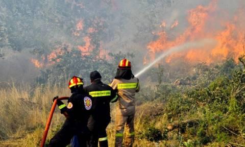 Βοιωτία: Σε εξέλιξη μεγάλη πυρκαγιά στο Παύλο