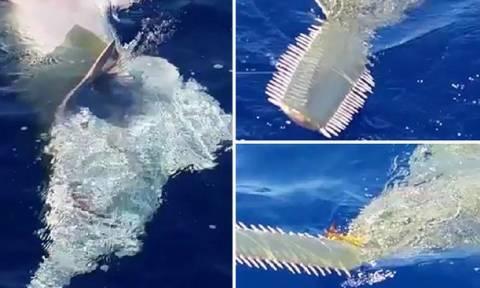 Αλλόκοτο θαλάσσιο πλάσμα αναδύθηκε μπροστά τους (video)