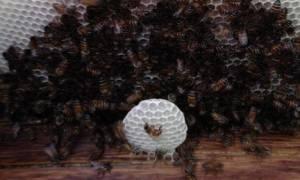 Αμερικανός μπήκε στο... μάτι χιλιάδων μελισσών αλλά επέζησε της επίθεσης