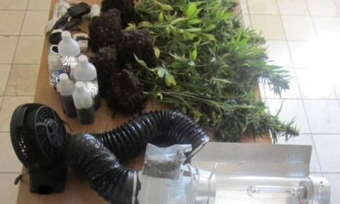 Φθιώτιδα: Είχε μετατρέψει το σπίτι του σε θερμοκήπιο καλλιέργειας χασίς
