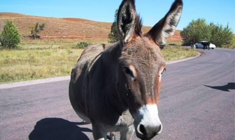 Λέρος: Αριθμός κυκλοφορίας για... γαϊδούρια, μουλάρια και άλογα!