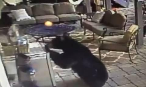 Δε θέλει κόπο, θέλει τρόπο: Διψασμένη αρκούδα κλέβει… μπύρες από σπίτι (video)