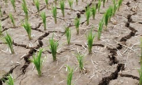Βόρεια Κορέα: Αντιμέτωπη με τη χειρότερη ξηρασία των τελευταίων ετών (video)