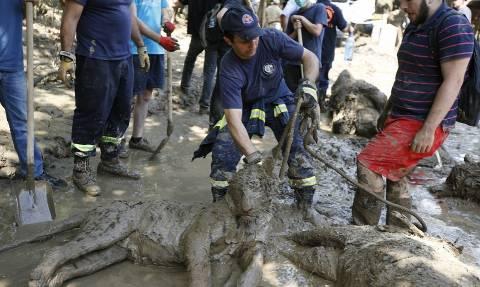Γεωργία: Τίγρη που ξέφυγε από ζωολογικό κήπο σκότωσε άνθρωπο (video)