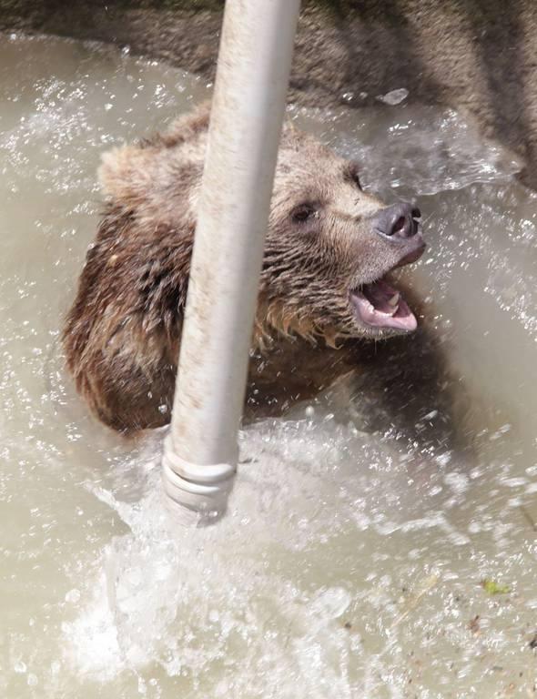 Τετραπέρατη αρκουδίτσα: Δείτε πώς κατάφερε να γλιτώσει από ένα πηγάδι (pics)