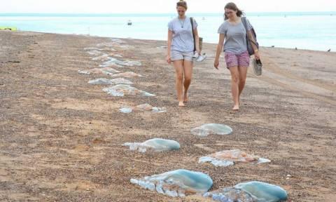 Τεράστιες μέδουσες στις παραλίες της Βρετανίας (photos)