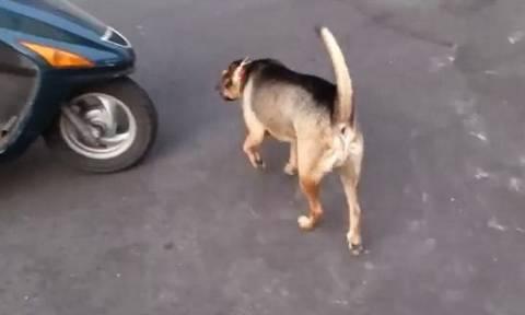 Εύβοια: Καταζητείται δικυκλιστής που κλώτσησε και σκότωσε σκύλο