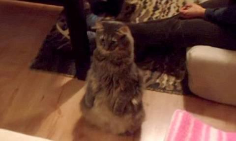 Γάτα... κεραυνόπληκτη συναντά για πρώτη φορά το νέο μέλος της οικογένειας (video)