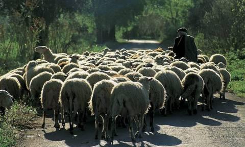 Ιωάννινα: Ώρες αγωνίας για βοσκό που αγνοείται εδώ και 3 ημέρες