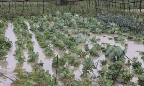 Φαρκαδόνα: Σε απόγνωση οι αγρότες από τις καταστροφές σε καλλιέργειες