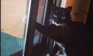 Γάτες που τις έπιασαν στα πράσα (photos)