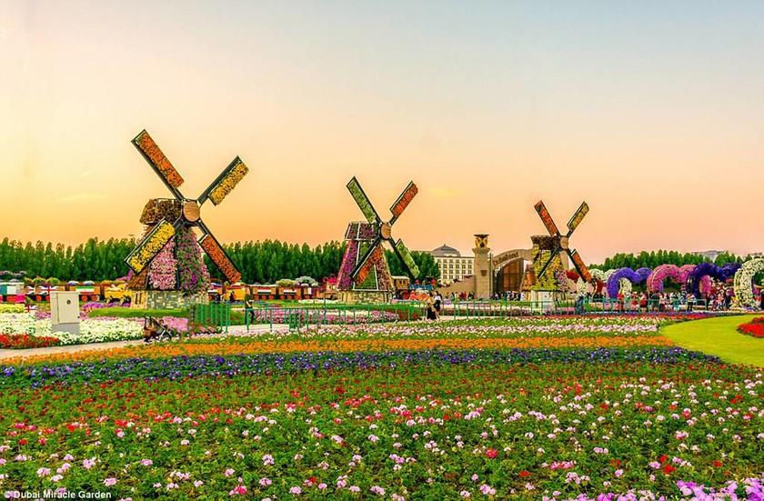 Πού βρίσκεται η έρημος… με τα 45 εκατ. λουλούδια; (photos)